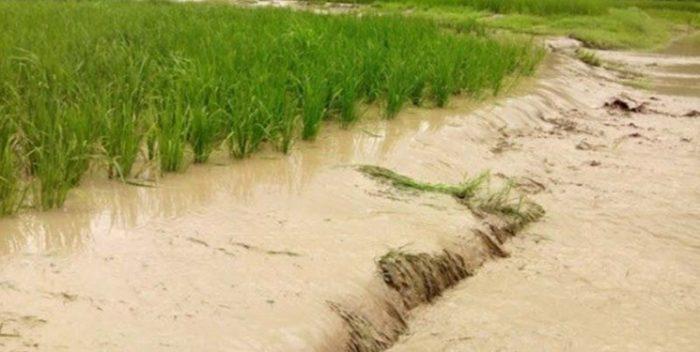 احتمال پرداخت بیش از ۵۰ درصد خسارت به کشاورزان سیلزده