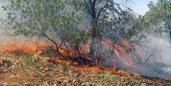 ۹۵ درصد آتش سوزی جنگلهای بهبهان کنترل شد