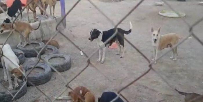 برخورد قانونی و عزل فرد خاطی در ساماندهی سگهای بدون صاحب در شهرداری بندر امام