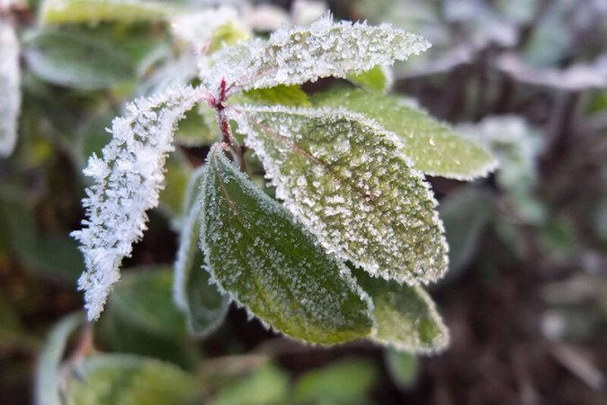 سرما به محصولات کشاورزی دزفول خسارت زد