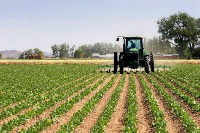 صادرات سه هزار میلیارد ریال سبزی و صیفی ازخوزستان