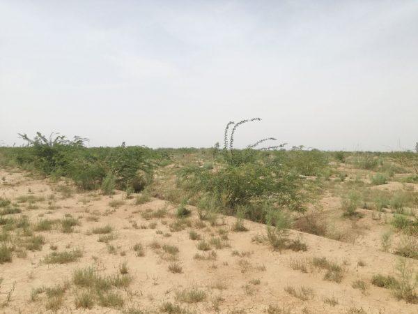 برنامههای مقابله با ریزگرد در خوزستان نباید رها شوند