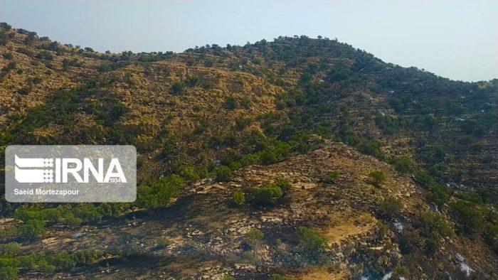 ۵۰ هکتار از جنگلهای اندیکا در آتشسوزی خسارت دید