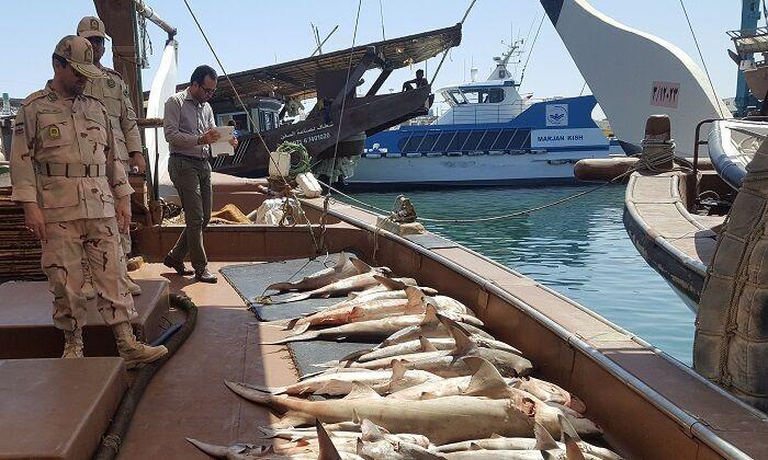 توقیف ۱.۶تن ماهی قاچاق در آبهای خوزستان