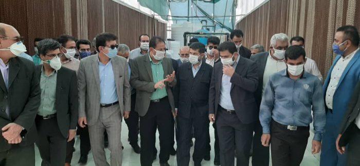 نخستین گلخانه هیدروپونیک شمال خوزستان بهرهبرداری شد