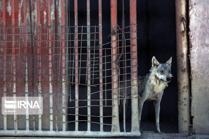 باغ وحش هویزه؛ اسارتگاه حیوانات