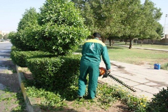 ۱۱۵هزار اصله درخت کنوکارپوس در اهواز هرس میشوند