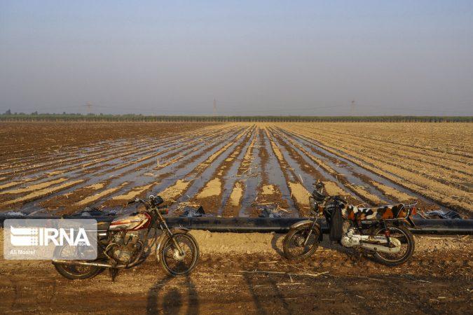 هدف گذاری کاهش ۲۰درصدی مصرف آب در مزارع نیشکر خوزستان