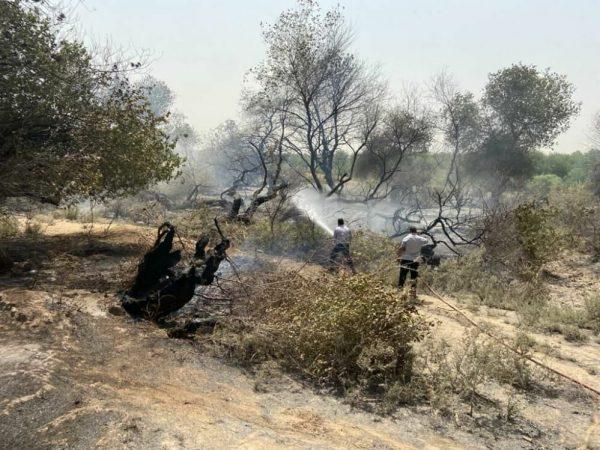 معرفی پنج نفر از متهمان آتشسوزی پارکهای ملی کرخه و دز به دادگاه
