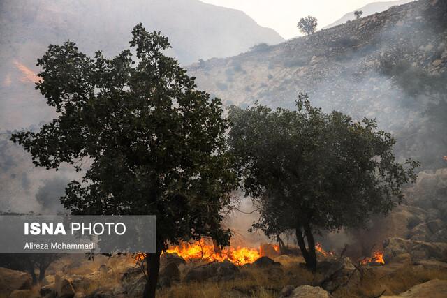 ۲۵۰ درخت پارک ملی دز در آتش سوختهاند