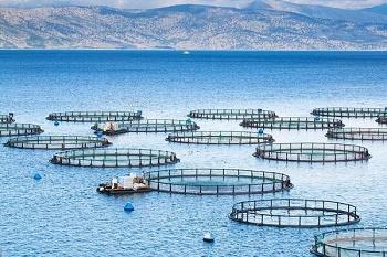صدور مجوز پرورش ماهی در قفس برای ۲ سد خوزستان