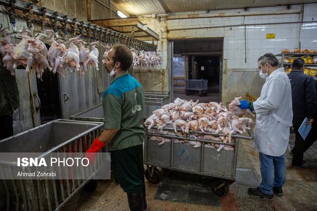 یک دلیل برای گرانفروشی مرغ کشتار روز در بازار
