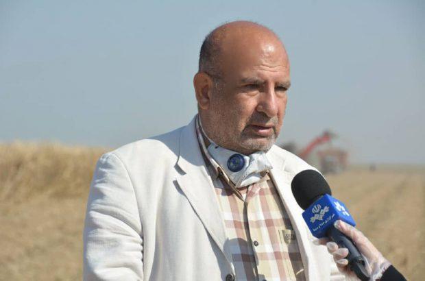 پایان عملیات برداشت نیشکر از سطح ۴۸ هزار هکتار از مزارع نیشکر